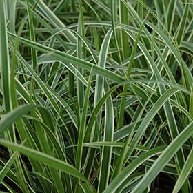 Plant Photo 9