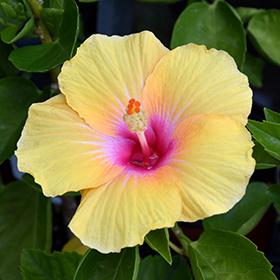 Tropical Photo